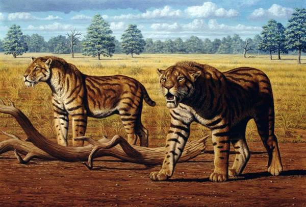 Smilodon Wall Art - Photograph - Sabre-toothed Cats, Artwork by Mauricio Anton