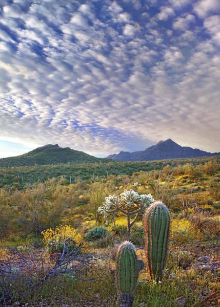 Photograph - Saguaro Carnegiea Gigantea by Tim Fitzharris