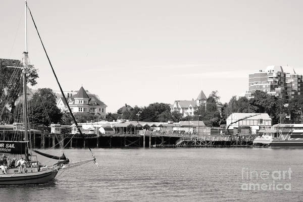 Photograph - Sail Away by Traci Cottingham