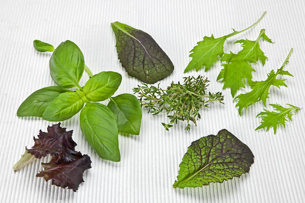 Thyme Photograph - Salad Greens And Spices by Joana Kruse