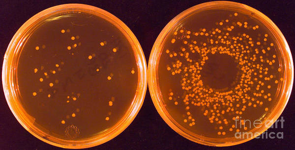 Wall Art - Photograph - Salmonella by Science Source