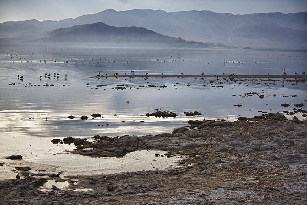 Sonny Bono Wall Art - Photograph - Salton Sea Birds by Linda Dunn