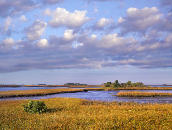Cedar Key Photograph - Saltwater Marshes At Cedar Key Florida by Tim Fitzharris
