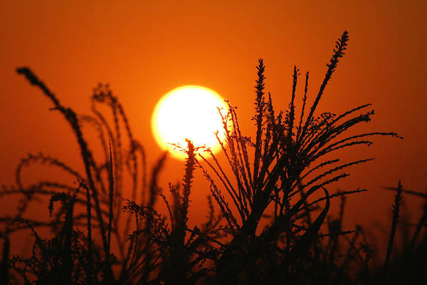 Photograph - San Joaquin Sunset by Diane Bohna