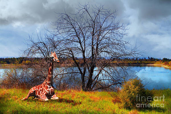 Colorful Giraffe Photograph - Sanctuary . 7d12636 by Wingsdomain Art and Photography