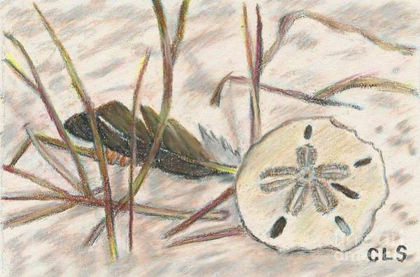 Beach Grass Drawing - Sand Dollar And Feather On The Beach by C L Swanner