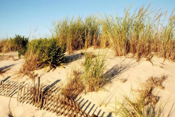 Wall Art - Photograph - Sand Dune IIi - Jersey Shore by Angie Tirado