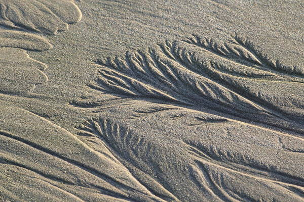 Photograph - Sand Formations by Shane Bechler