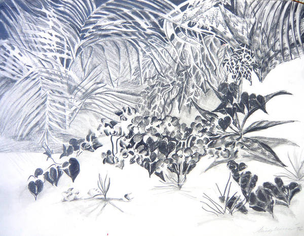 Ferns Drawing - Sand Garden by Mindy Newman