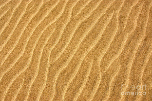 Sand Wall Art - Photograph - Sand Ripples Abstract by Elena Elisseeva