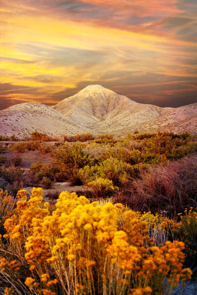 Photograph - Sandcapped Adobe Dunes by Rick Wicker