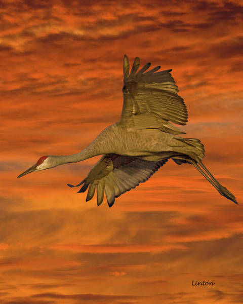 Photograph - Sandhill Sunset by Larry Linton