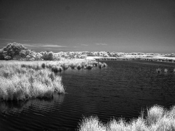 Photograph - Sandpiper Pond - Infrared by Bill Barber