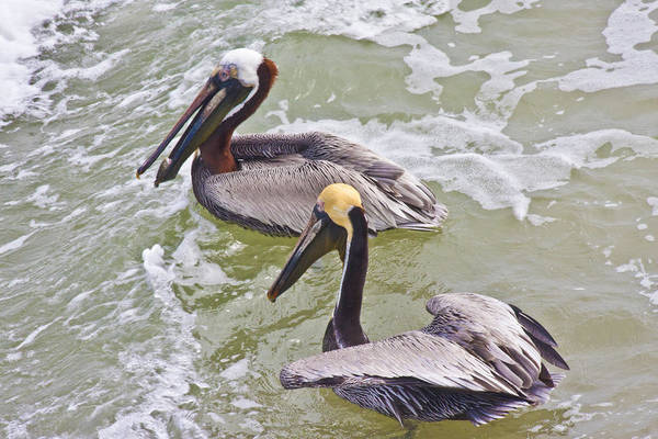 Pelican Wall Art - Photograph - Save Some For Me by Betsy Knapp