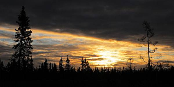 Photograph - Sax-zim Sunrise by Larry Ricker