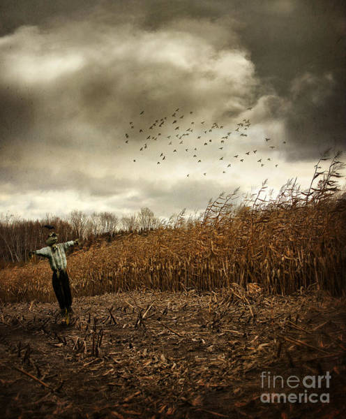 Photograph - Scarecrow In Autumn Corn Field by Sandra Cunningham