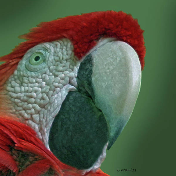 Photograph - Scarlet Macaw 3 by Larry Linton