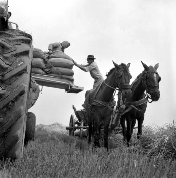 Photograph - Scene From A Collective Farm by Emanuel Tanjala