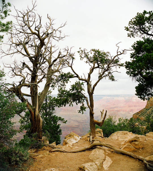 Photograph - Scenic Grand Canyon 17 by M K Miller