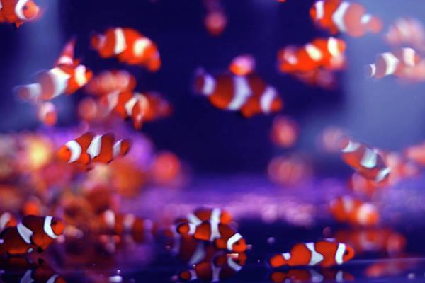 Horizontal Stripes Photograph - School Of Fish by Yuki Crawford