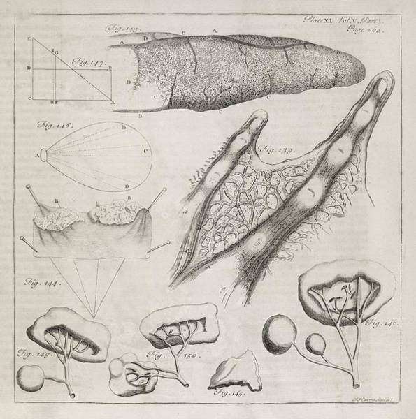 Tissue Paper Photograph - Science Illustrations, 18th Century by Middle Temple Library