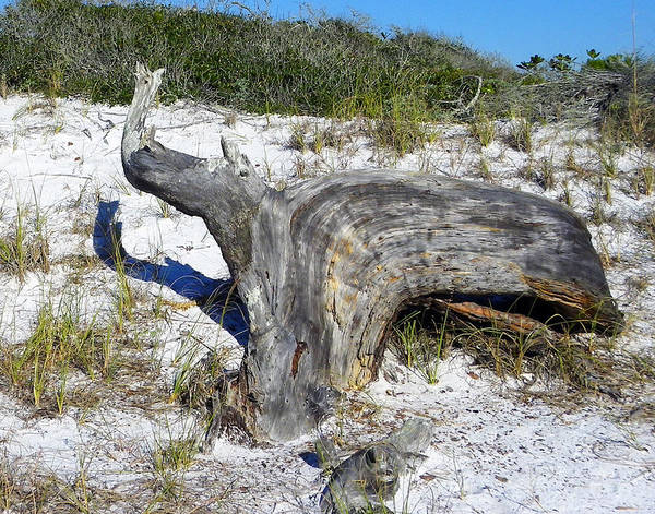 Grayton Beach Photograph - Sculpted By The Wind by Judy Wanamaker