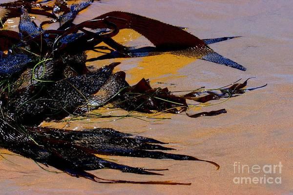 Photograph - Pismo Beach Sea Drift by Tap On Photo