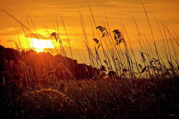 Hilton Head Island Photograph - Sea Oats In The Sun by Steven Llorca