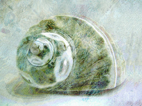 Teal Mixed Media - Sea Shell I by Ann Powell