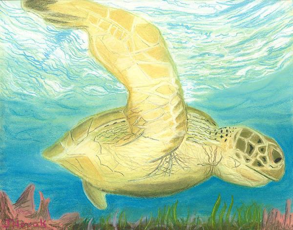 Wall Art - Drawing - Sea Turtle  by Jackie Novak