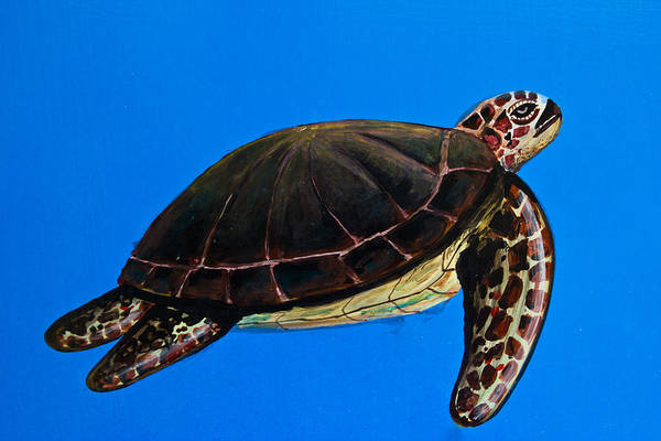 Painted Turtle Drawing - sea turtle painting on Temple of the Emerald Buddha wall  by Wasan Gredpree