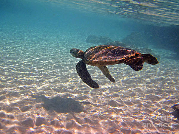 Photograph - Sea Turtle Shadow On Sand by Bette Phelan