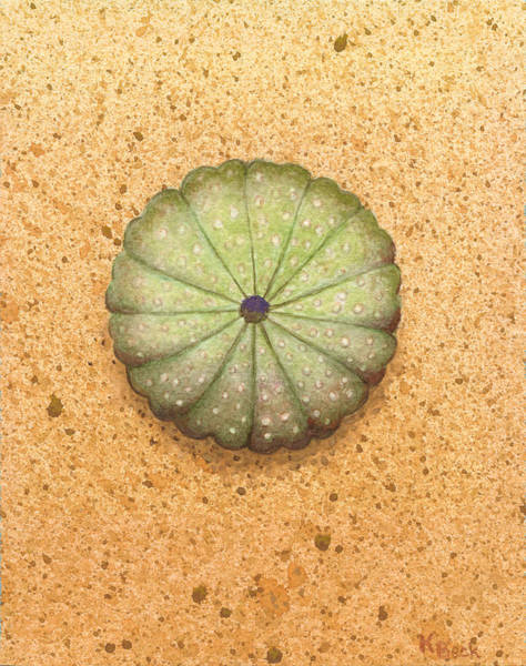 Wall Art - Painting - Sea Urchin by Katherine Young-Beck