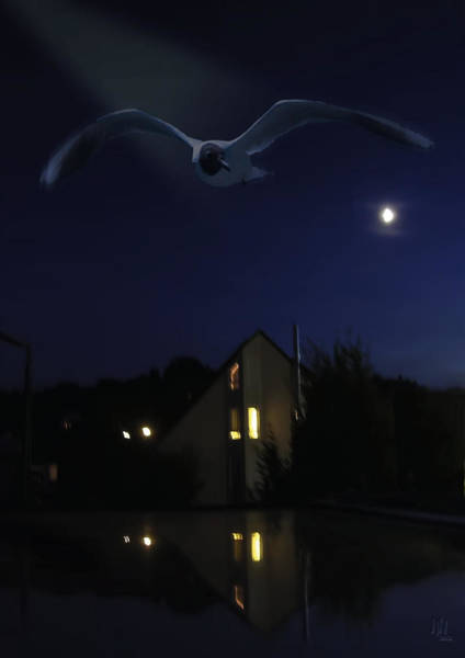 Low Key Digital Art - Seagull At Night Flight by Nafets Nuarb