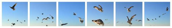 Photograph - Seagull Collage by Michelle Calkins