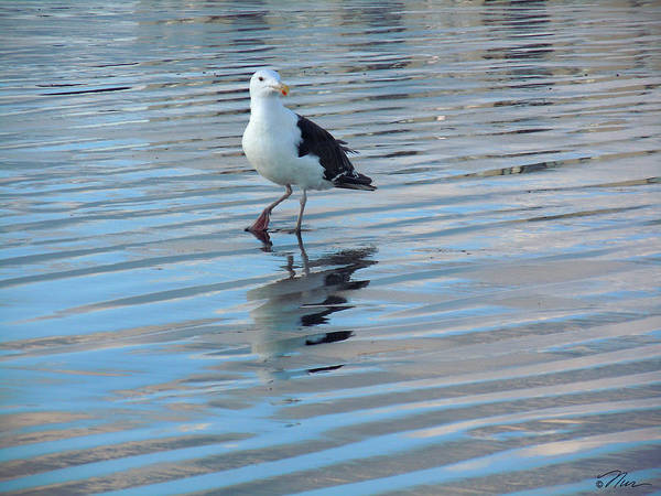 Photograph - Seagull Dance by Nancy Griswold