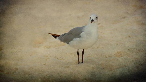 Photograph - Gull by Sandy Keeton