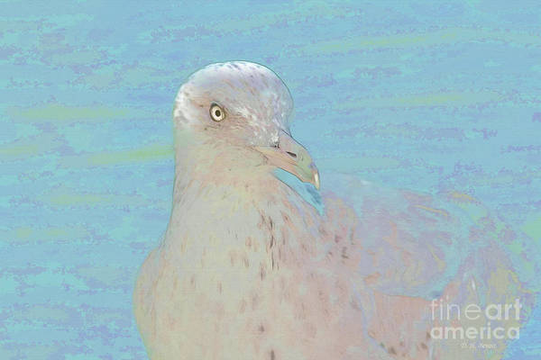 Photograph - Seagull Soft Art by Deborah Benoit