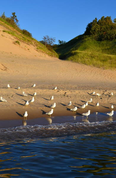 Holland State Park Photograph - Seagulls At The Bowl by Michelle Calkins