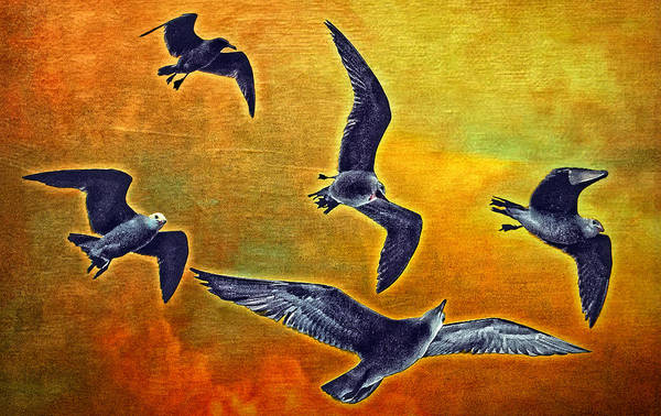 Seagulls In Flight Art Print by Donna Pagakis