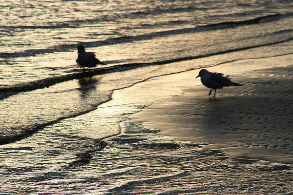 Wall Art - Photograph - Seagulls Silhouettes At Sunset by Valia Bradshaw