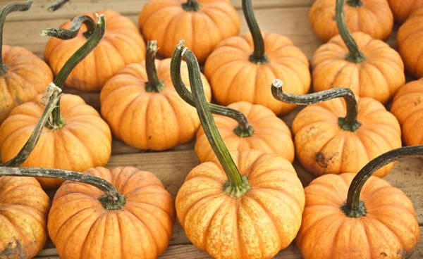 Cucurbitaceae Photograph - Searching Pumpkins by Douglas Barnett