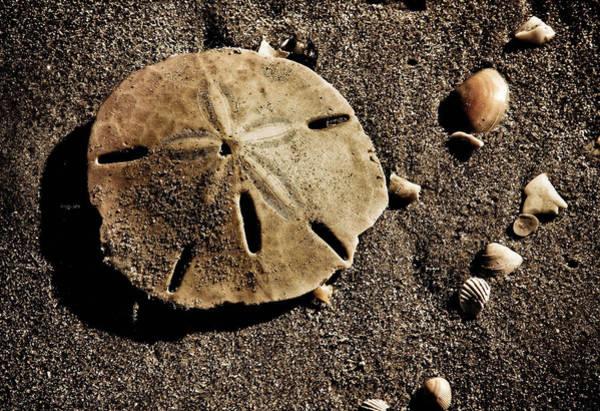 Photograph - Seashell Heaven by Trish Tritz