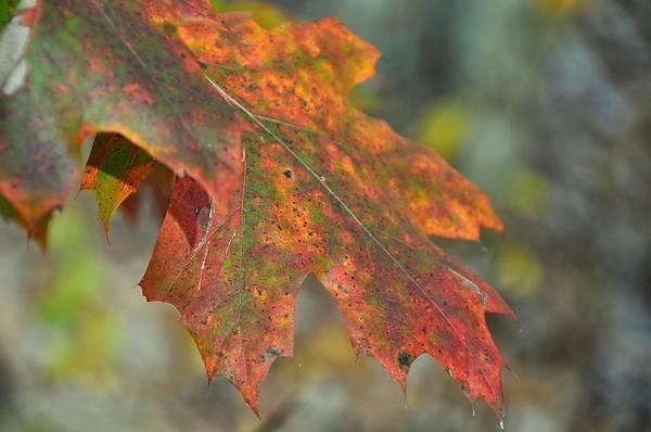 Photograph - Seasonal Age Spots by JAMART Photography
