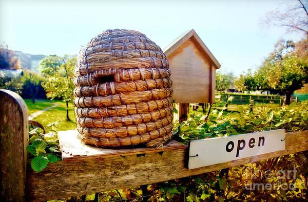 Photograph - Seasonal Bee Farm  by Ariadna De Raadt