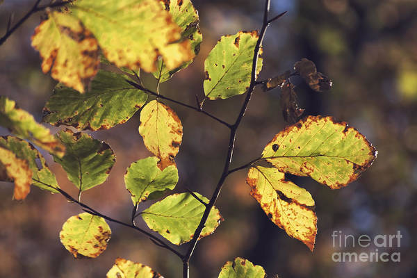 Wall Art - Photograph - Season's Last Colors by Wedigo Ferchland