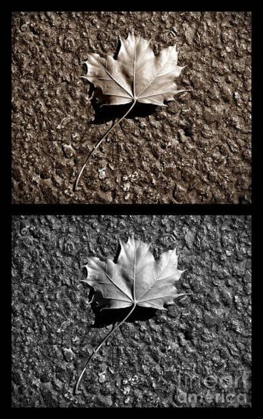 Wall Art - Photograph - Seasons Of Change by Luke Moore