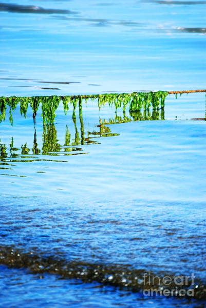 Seaweed Photograph - Seaweed by HD Connelly