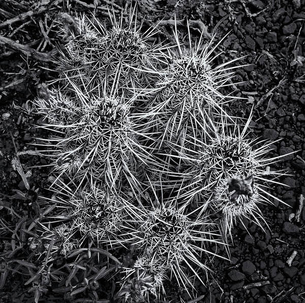 Photograph - Sedona Cactus by Tom Singleton