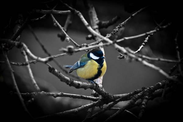 Photograph - Selective Bird by Chris Boulton
